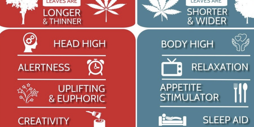Which Cannabis Strain is more effective?